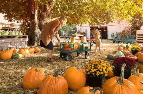 Fun at a pumpkin farm in Fall